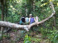 trekking at Handeeleum Island jungle